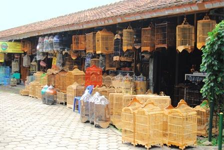 Pasar Burung Pasty Dongkelan Yogyakarta