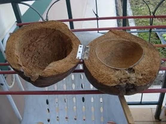 Sarang dari batok kelapa dengan ensel