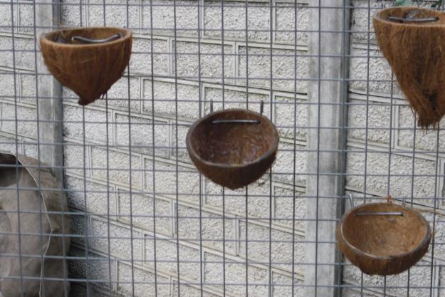 Bentuk sarang dari batok kelapa yang umum digunakan dalam penangkaran kenari dan sejenisnya