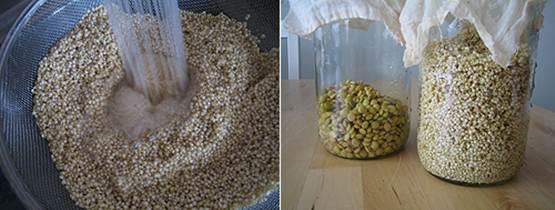Cuci bersih biji lalu masukan dalam toples