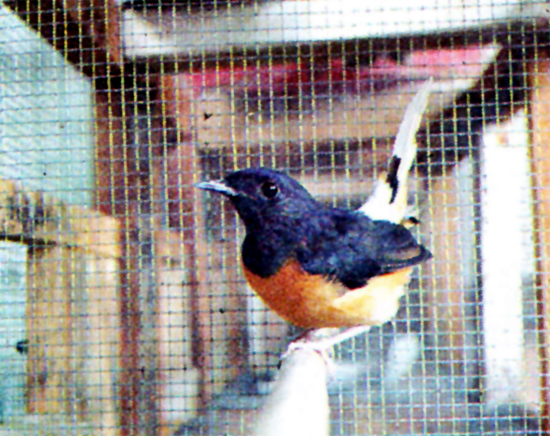 Yadi Suzuki Bird Farm