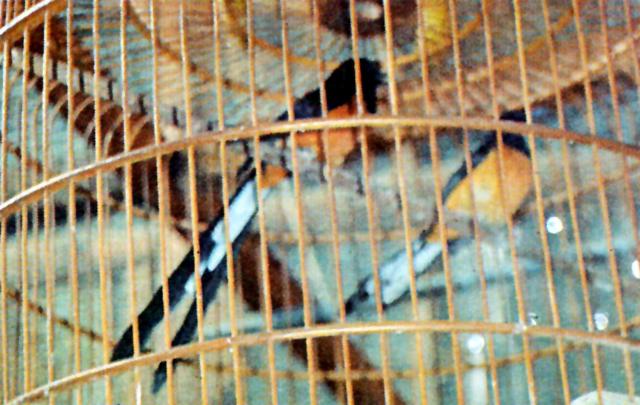 Yadi Suzuki Bird Farm 3