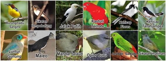 Daftar burung dalam kategori terancam