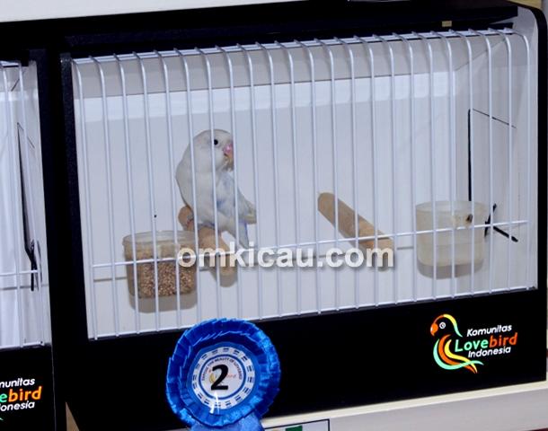Lovebird Bunda Putri milik U-Bye (Laskar Garasi ),