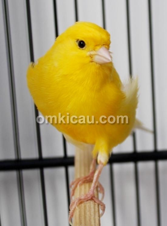 Kenari Yellow Topaz