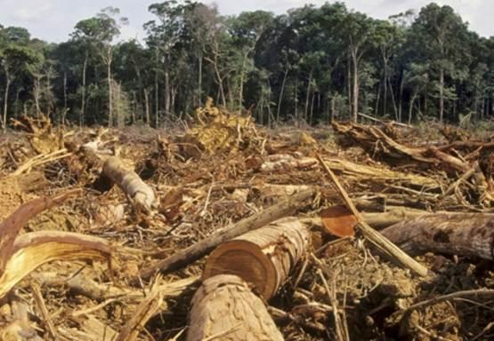 Masalah umum yang terjadi di Indonesia adalah pengrusakan hutan