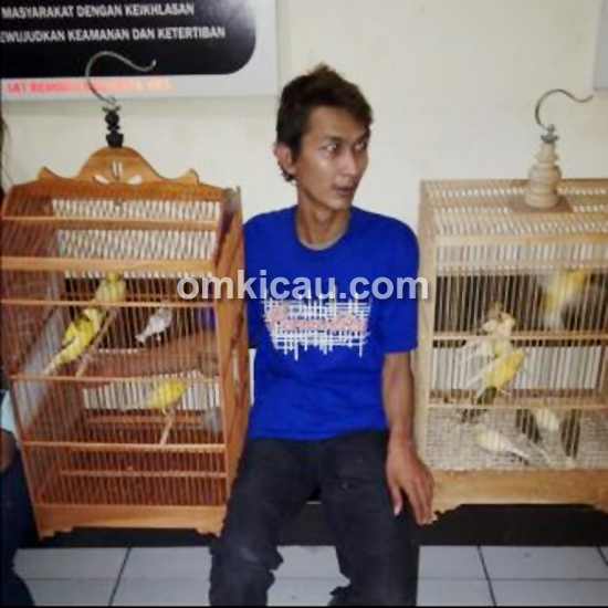 Pencuri burung
