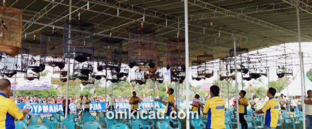 Sesi murai batu Liga Sumatera 7