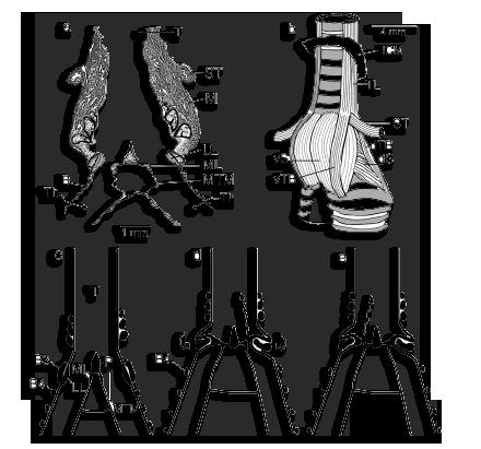 Teknik olah vokal pada burung kicauan