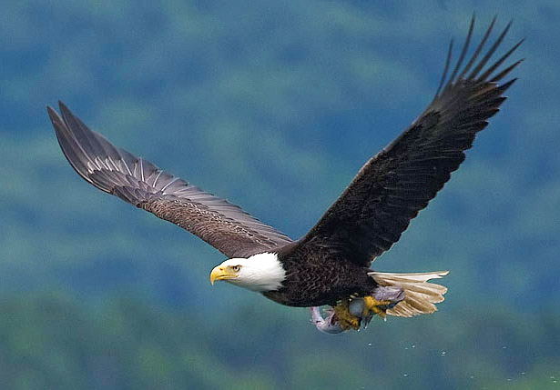Download 98+  Gambar Burung Elang Mp3  Paling Keren Free