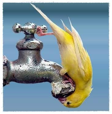 burung minum