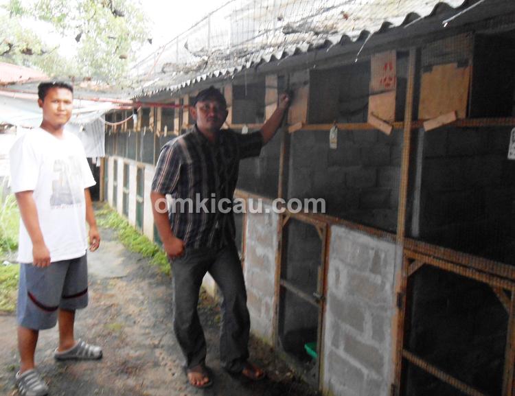 Didik 88 Bird Farm Jambi