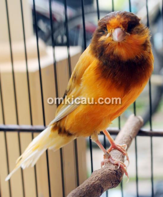 Gudang Kenari Bird Farm