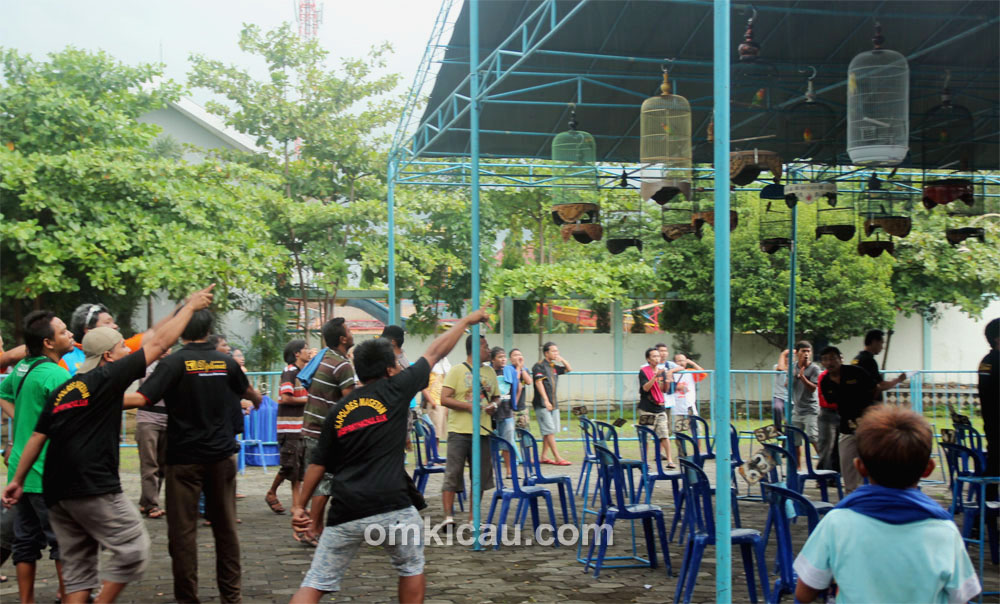 Lomba Burung Diplomat Open II Madiun