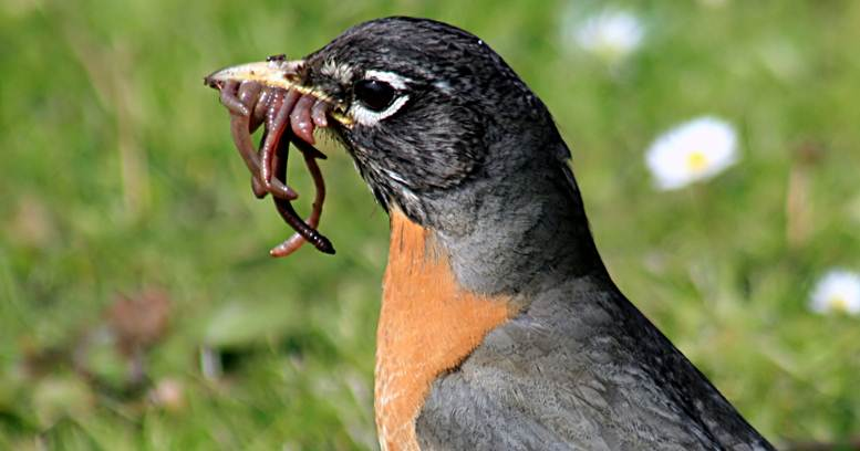 Burung makan cacing