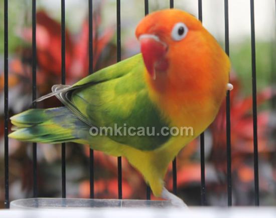 JP Bird Farm Depok
