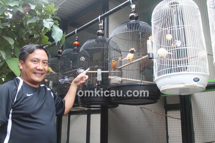 Legenda BF – Breeding Lovebird dan Kenari YS