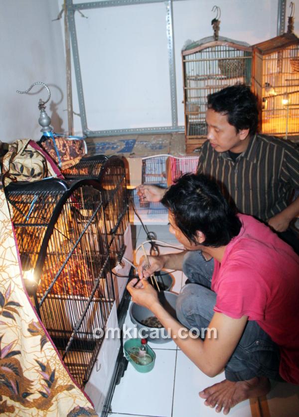 Izumi Bird Farm Cibinong Bogor