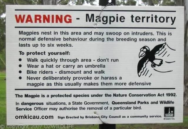 Papan peringatan yang di pasang di lokasi burung ini bersarang