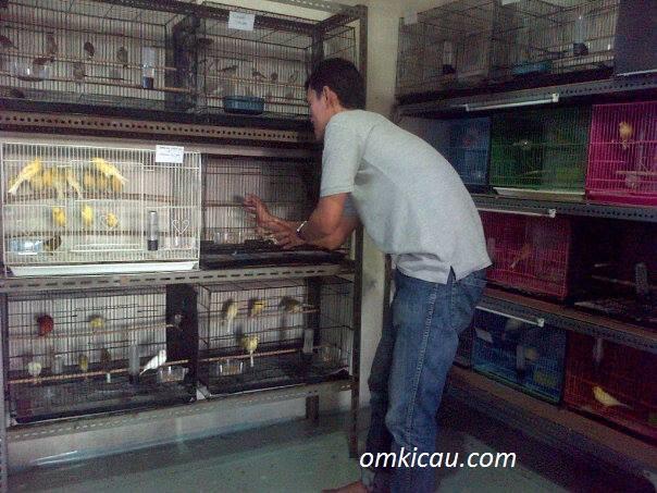 Pusat penjualan burung kenari imopr dan lokal