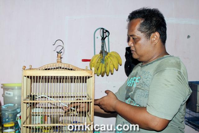 Breeding murai batu ABS BF Jakarta
