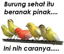 burung sehat beranak pinak Om