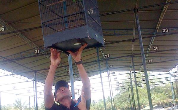 Lomba Burung Raider Cup