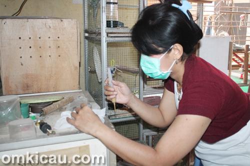 Rudy Pelung Bird Farm Jakarta