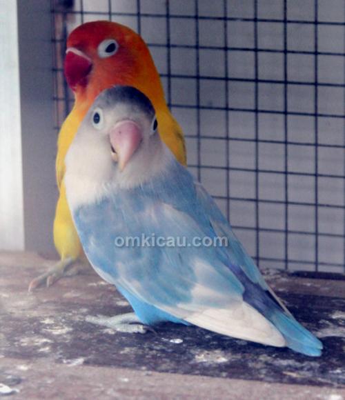 Andre SAS - SAS Bird Farm