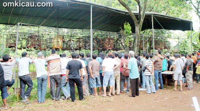 Lomba Burung Hobbyku Mania Jakarta