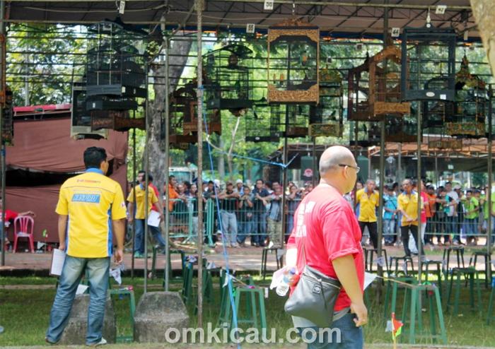 Lomba Burung Berkicau IBC Cup 2014