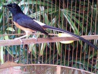 Burung adaptasi