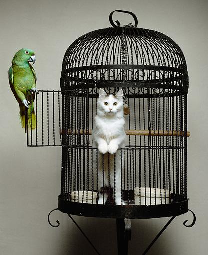 kucing dan burung