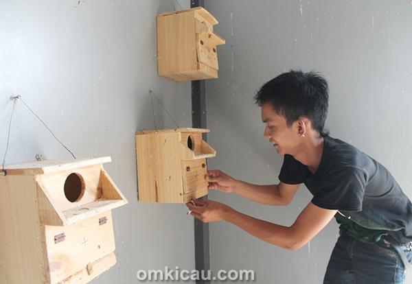 Penangkaran lovebird JBF Bekasi