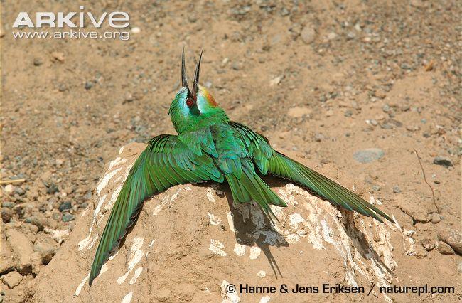 Burung berjemur