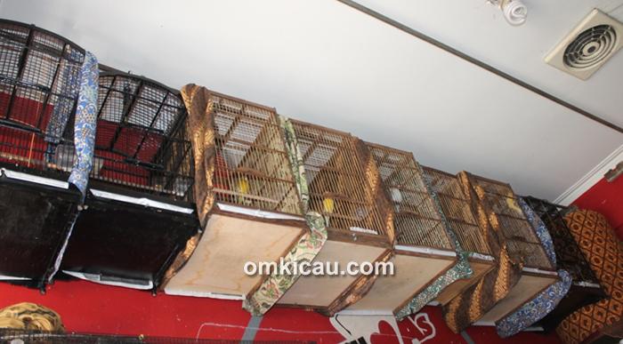 Mifta Bird Shop