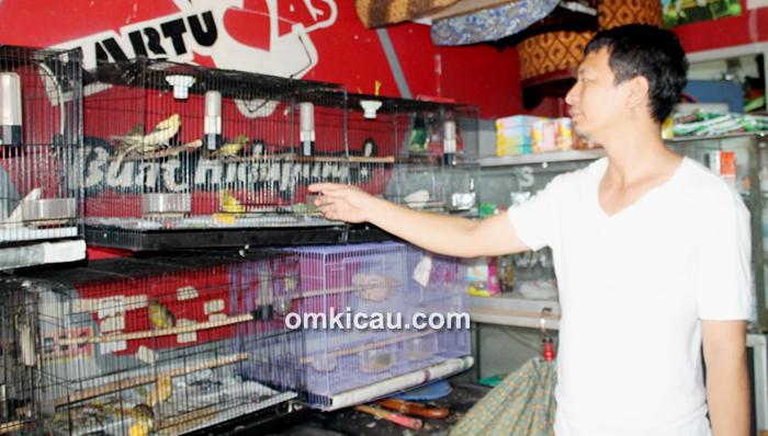 Om Ifung - Mifta Bird Shop