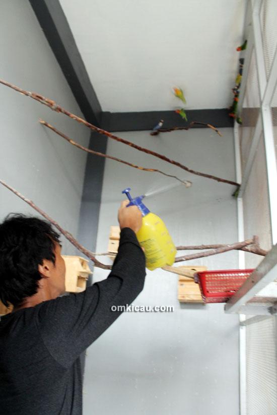 Ebod Jaya Farm – Menandai lovebird ngekek panjang