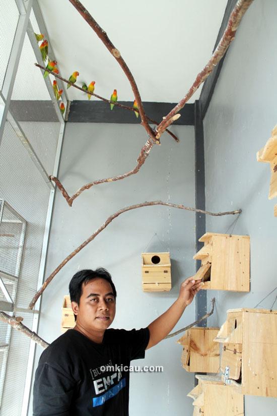 Ebod Jaya Farm – Om Bayu mencetak jawara dari kandang koloni