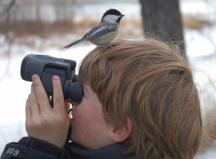 Birdwatching