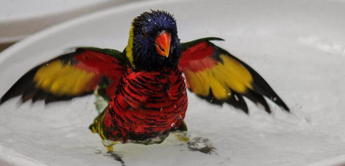 Burung paruh bengkok