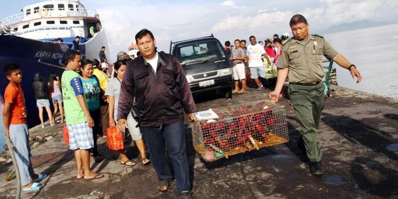 Ratusan burung Nuri Talaud yang hendak diselendupkan dari Talaud ke Filipina tiba di pelabuhan Manado untuk diserahkan ke Pusat Penyelamatan Satwa Tasikoki, Bitung. Kompas.com/Ronny Adolof Buol