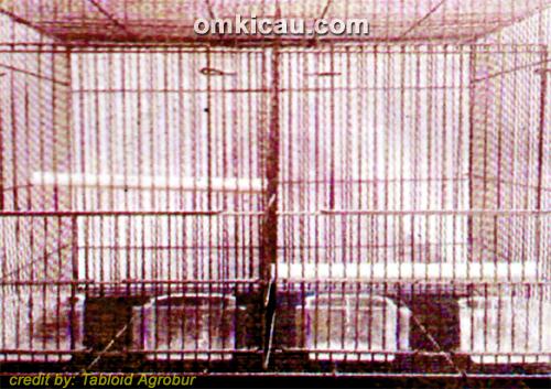 sangkar breeding yang bisa digantung