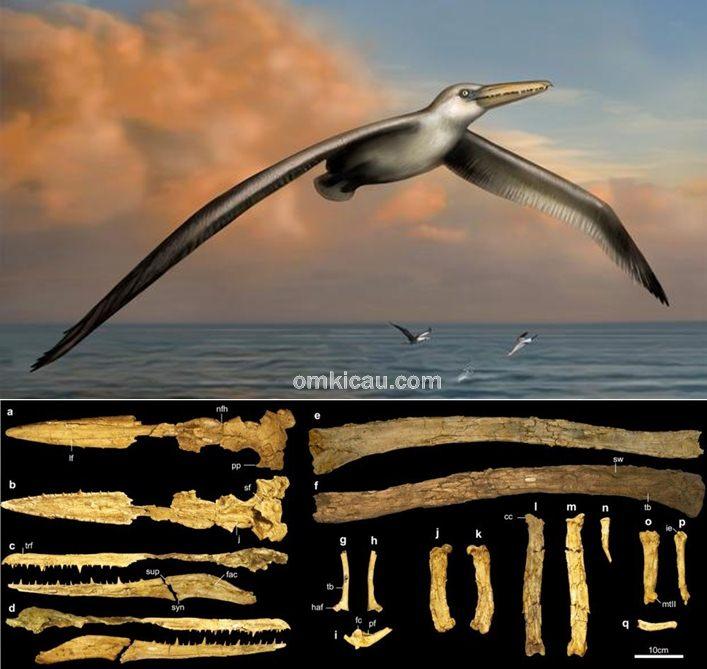 spesies burung terbesar