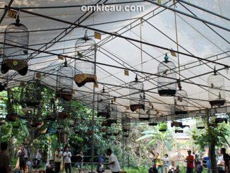Suasana lomba burung di Cinere Enterprise Jakarta