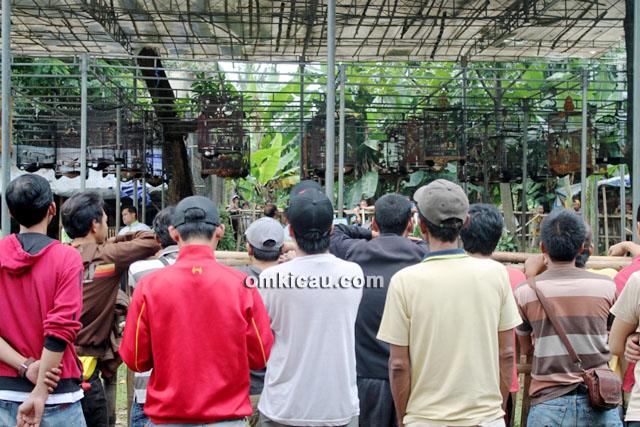Lomba Burung Ramadhan Fiesta Mampang