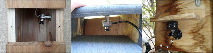Memasang kamera pada bagian dalam kotak sarang
