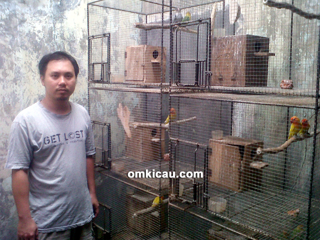 Arief Adi Bird Farm Pati
