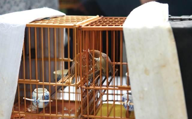 Burung huang teng