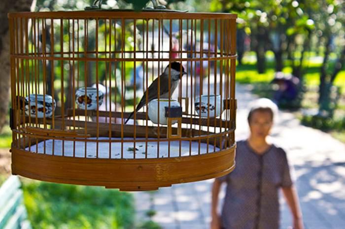 Penggemar burung di negara tetangga tak kalah ramainya dengan di Indonesia